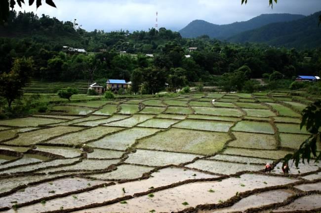 देशका सम्पूर्ण बाँझो जमिनमा धान खेती