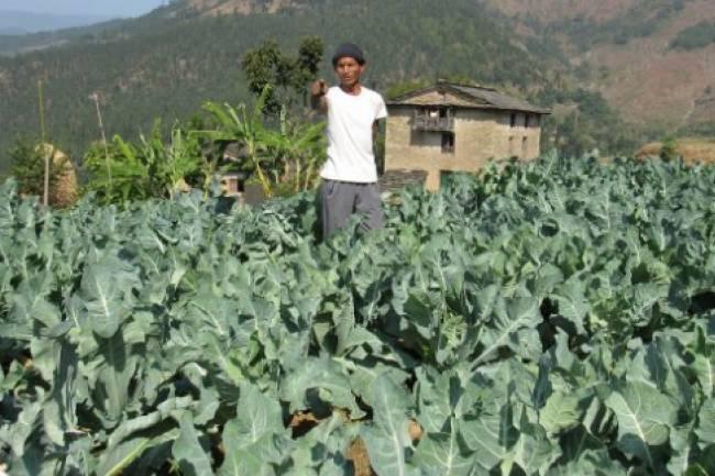 भारतको रोजगारी छोडेर गाउँमै तरकारी खेती, तीन सय किसान लाभान्वित